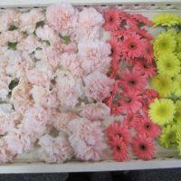 仙川斎場:献花